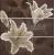 APE DECOR SET (3) SONIA CHOCO 20X60 matný obklad 10mm dekor kvety